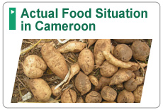 Actual Food Situation in Cameroon